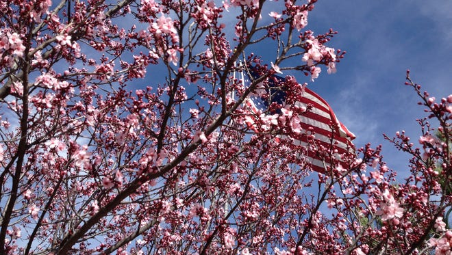 Silver City is enjoying Spring-like weather this week, and trees are blooming at the Murray Ryan Visitors Center. Today's weather is expected to be sunny and 75 degrees.