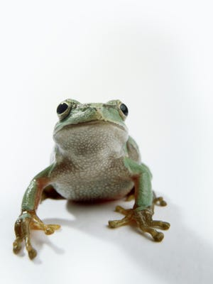 """Take the kids to the main branch of Nashville Public Library (615 Church St.) on Friday and Saturday to experience the Wishing Chair Production of """"The Celebrated Jumping Frog of Calaveras County."""""""