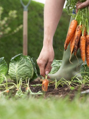 Want to become a certified Master Gardener? Here's your chance!