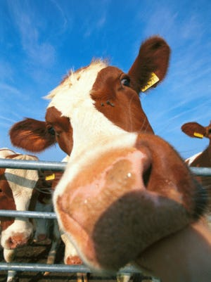 The impact of America's dairy and beef industry is the topic of a book chat at Wilson College.