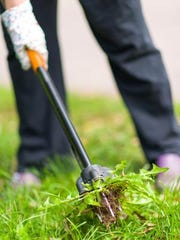 If you have a problem with crabgrass, prevention is key.