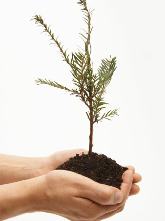 636137062093507914-baby-tree-ThinkstockPhotos-200395284-001.jpg
