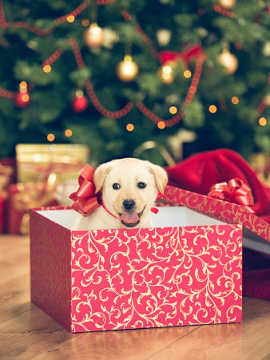 Christmas Puppies.The Pros And Cons Of Puppies For Christmas