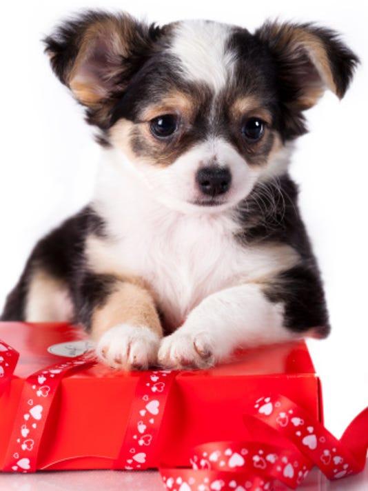 635514003619010491-doggygiftlist