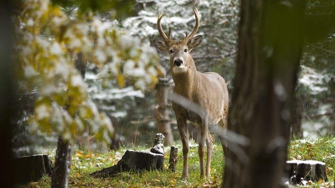 A handful of new hunting regulations were passed earlier this year.