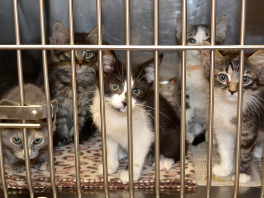 These kittens, along with dozens of other kittens,