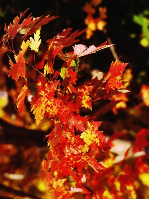 Those who live in the desert miss the intense colors of autumn.
