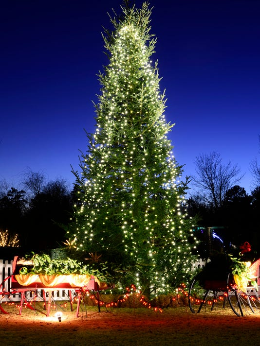 Daniel stowe botanical gardens ready for holidays - Daniel stowe botanical garden christmas ...
