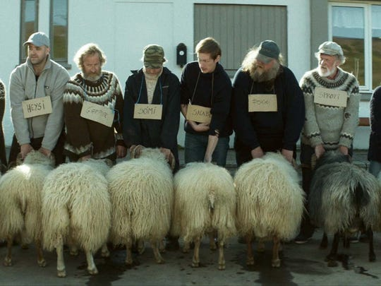 """A herd of the stars of the Icelandic film """"Rams"""" are"""