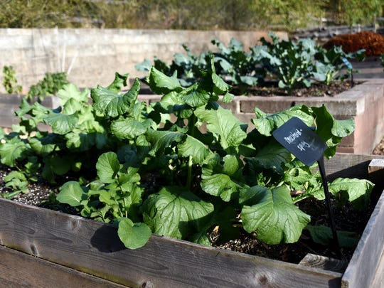 Mustard greens are among the South Carolina products you might find on your Thanksgiving table.