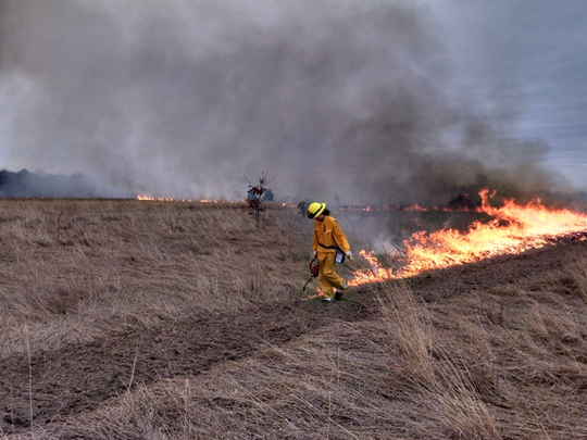 This grass field was burned to reduce wood vegetation,