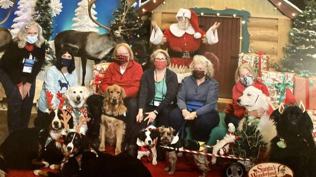 "Cheryl Wassus, coordinator of Therapy Dogs International Chapter #307, sits among several Christmas canines, including ""reindogs"" Link and Ella B; elves Olive, a cream Labrador, Brody, a black Labrador, Casey, a red Labrador, Rosie, a Newfoundland and Colby Jack; Mrs. Claus, Xena; and Santa Lilly, a white Pyrenees. ""After our Therapy Dog Chapter's window visits at Fountainview (of Monroe), we all cruised up to Cabela's for this pic with some of our Chapter pups,"" Wassus said."