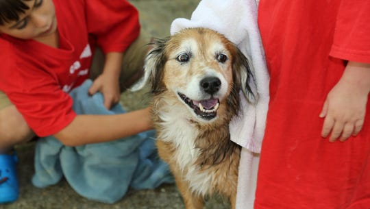 Get your pups squeaky clean at the Hawaiian Luau Dog