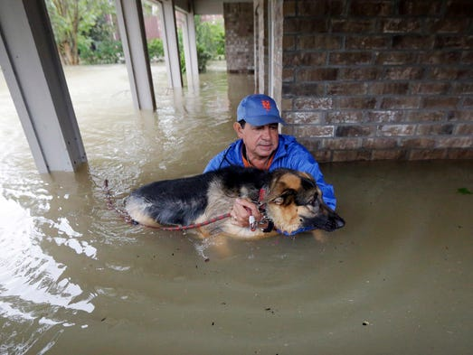 Dogs In Flood Carring Food