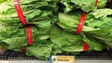 More illnesses reported from romaine lettuce tainted by E. coli