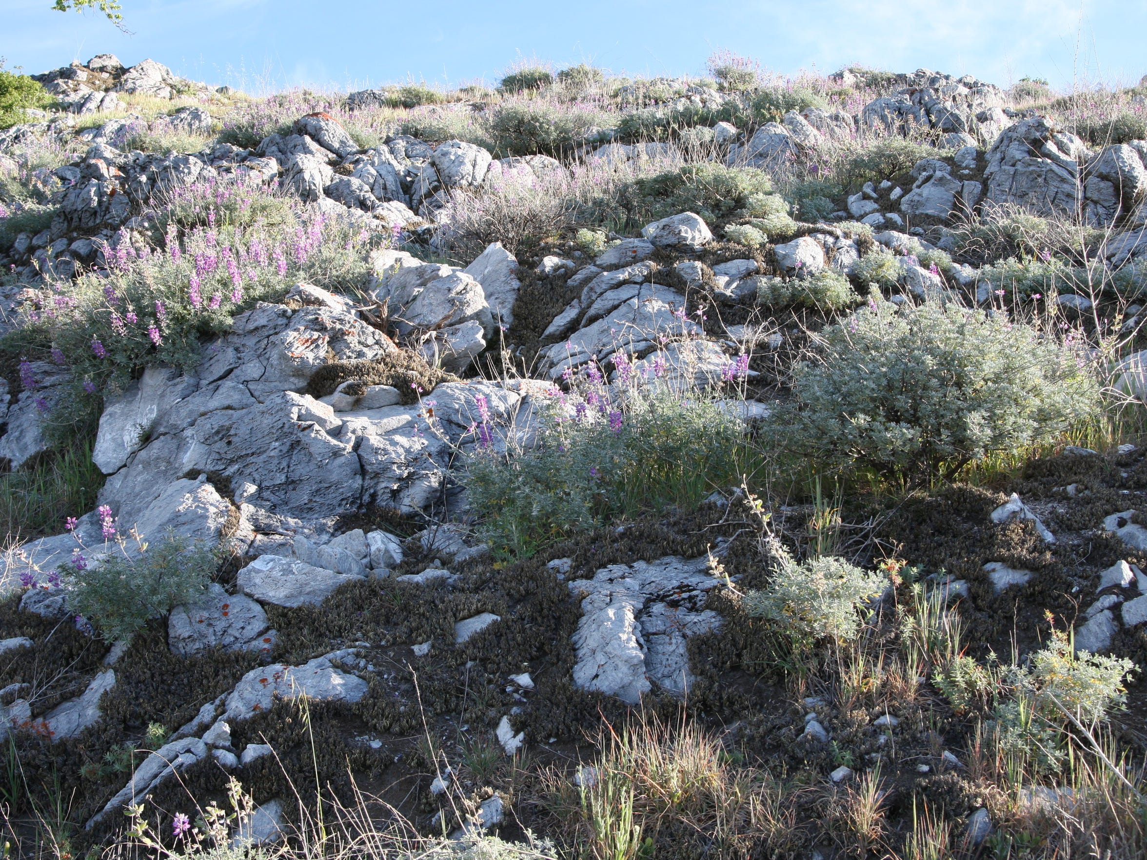 The granite outcrops in the meadows on Fremont Peak