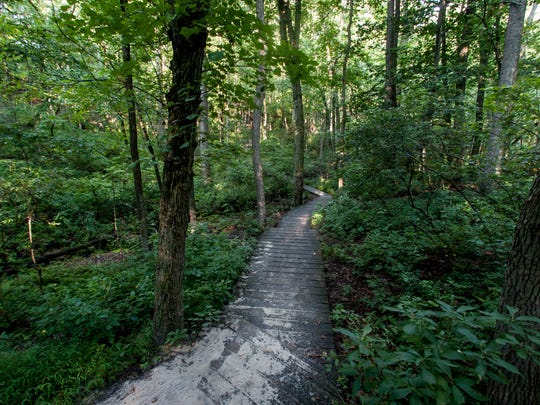Cheesequake State Park is stuffed full of 1569 acres and 9.5 miles of four trails.