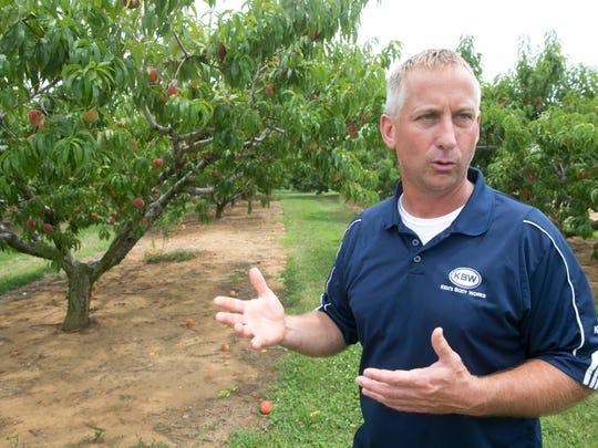 Peach picking at Battleview Orchards in Freehold. Orchard owner Scott Applegate  —July 8, 2016 -Freehold, NJ.-Staff photographer/Bob Bielk/Gannett NJ