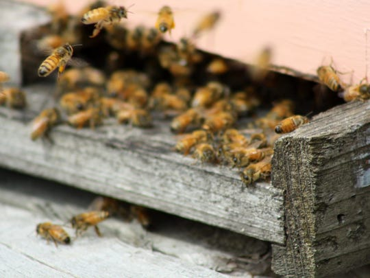 The honey bees at Warren Wilson College pollinate the