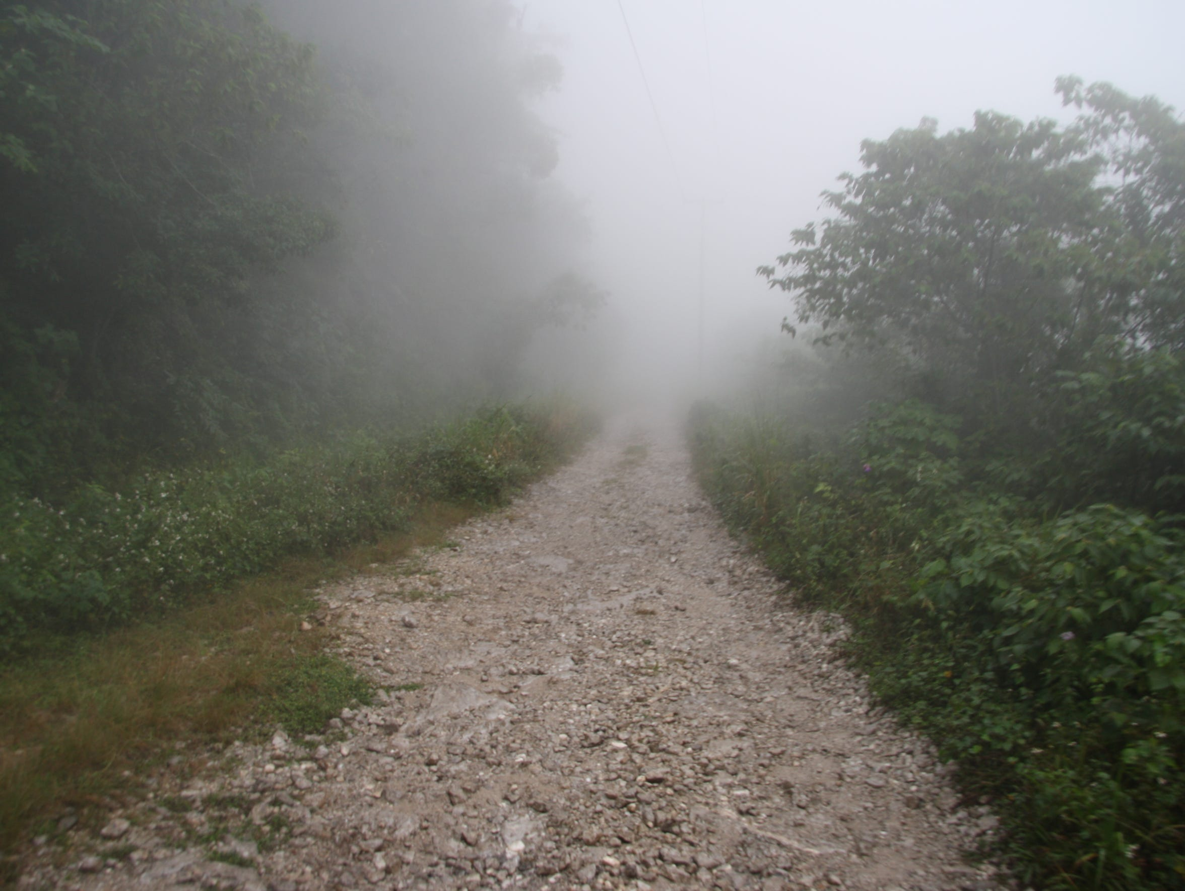 Mexico Cloud Forest