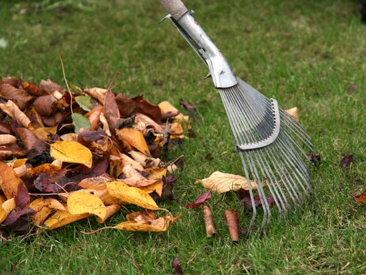 A rake and a pile of browned leaves