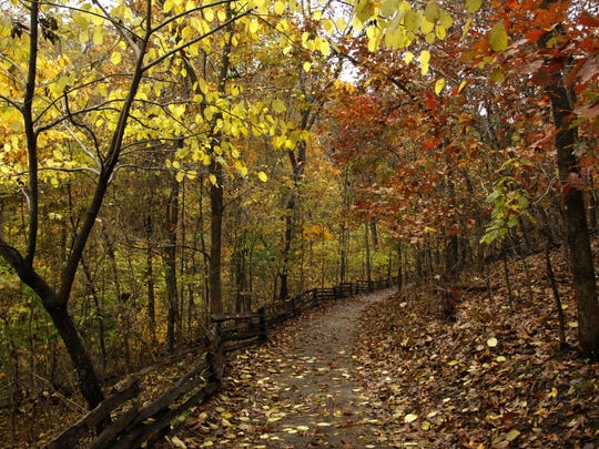 Fall color at the Springfield Conservation Nature Center