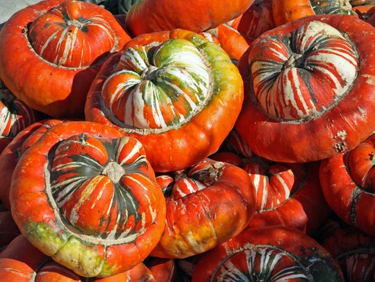 A pile of colorful sultan's turban squash on dispaly