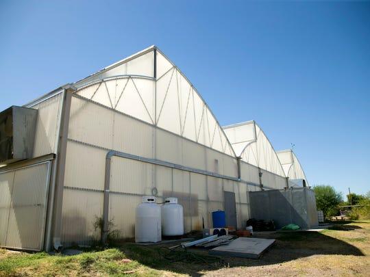 The Phoenix greenhouse where Arizona Microgreens grows