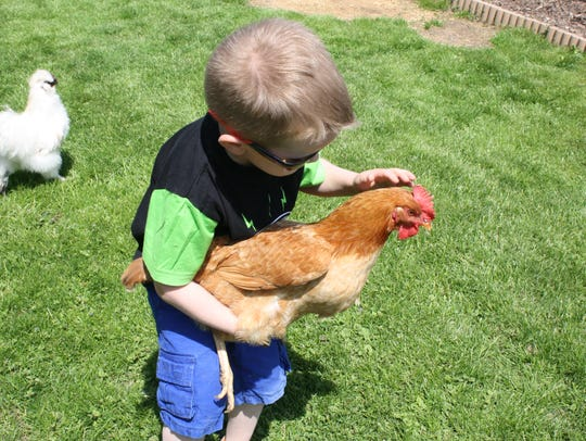 Jonny Anderson, 5, holds a chicken at his home in Ninevah.