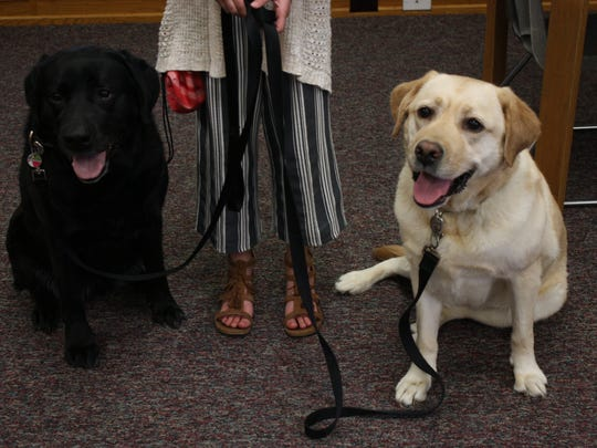 Labrador retrievers Riley (left) and Gracie (right) are therapy dogs at Palmer Elementary School in Windsor.
