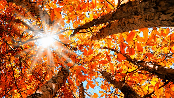 Places to see leaves change color near Louisville this fall