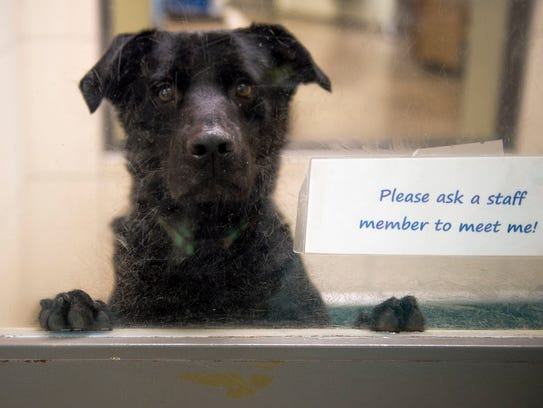 A dog peeks out the window at Young-Williams Animal Center.