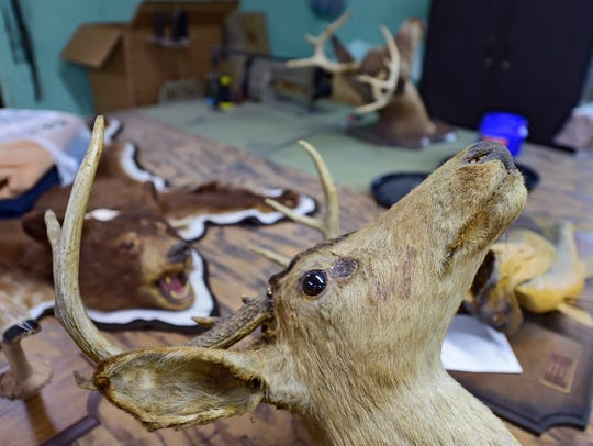 Ness Taxidermy, LLC in Seven Valleys works on animals