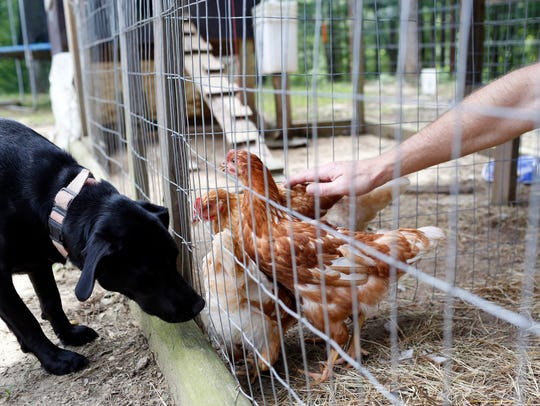 Bo Sandifer, right,  pets his chickens as his dog,