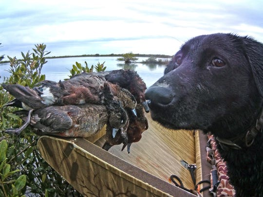 Jet guards a pile of wigeons and redheads following a recent hunt near Seadrift.