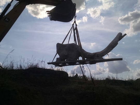 Skull being lifted from the Powder River bank.
