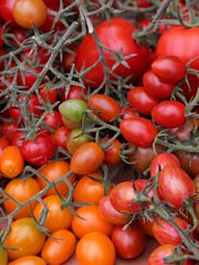 Some of the 6 heirloom varietals of tomatoes grown