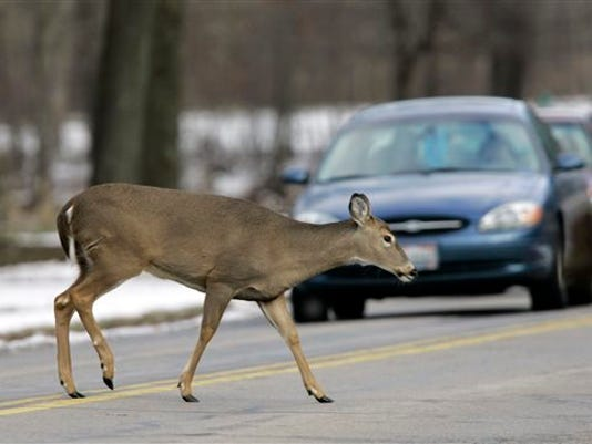 635486361309921055-Car-Deer-Collisions-Hess