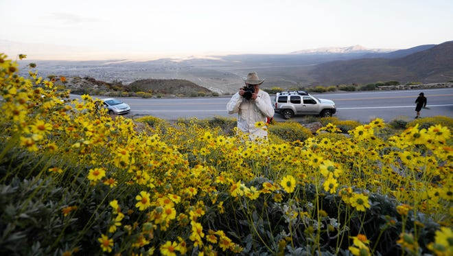 Retired California state park ranger Jim Long, of San Clemente, Calif., takes pictures among blooming desert shrubs in Borrego Springs, Calif., on March 27, 2017.
