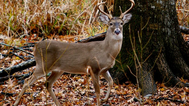 Alabama conservation officials are bracing for the inevitable introduction of chronic wasting disease to the state's deer population.