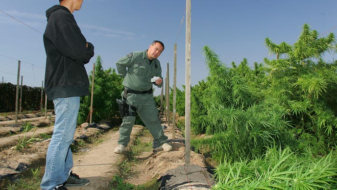 "Fresno County Sheriff Officer Lt. Richard Ko (right) is shown talking in October 2011 with a grower at a marijuana field in Sanger, Calif., which would later be eradicated. Some critics worry that a proposed ""right to farm"" amendment to Indiana's constitution, if passed, may someday make it hard to regulate marijuana farming, if it also comes to the Hoosier state."