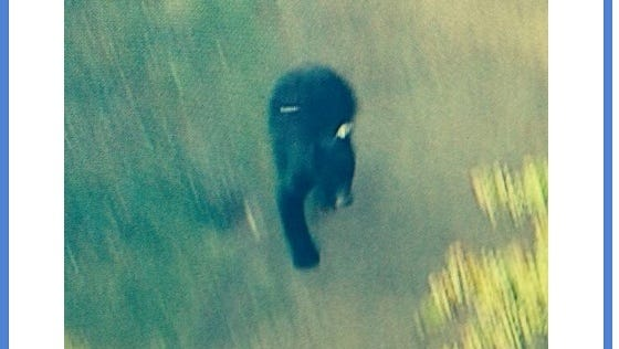 Julie Sone of KABC posted this tweet of a bear on the loose in the Granada Hills neighborhood of Los Angeles.