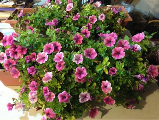 2016window-boxes-Riainf.jpg