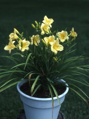 For the 2018 summer growing season, grow a few perennials in containers like the above daylily, Happy Returns. Move the plants around to change scenes during the summer months.