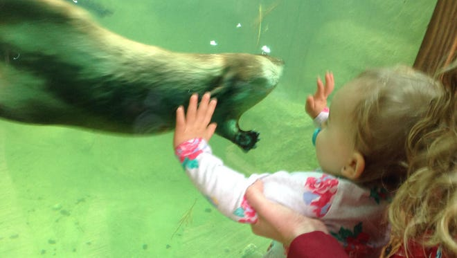 Isabella would love to get her hands on one of Brevard Zoo's otters.
