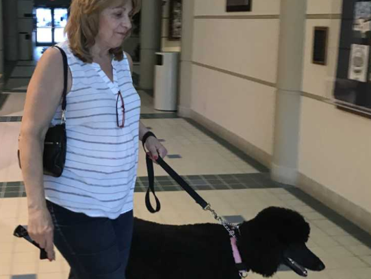 Marley and owner Cheryl Bailey are on their way into