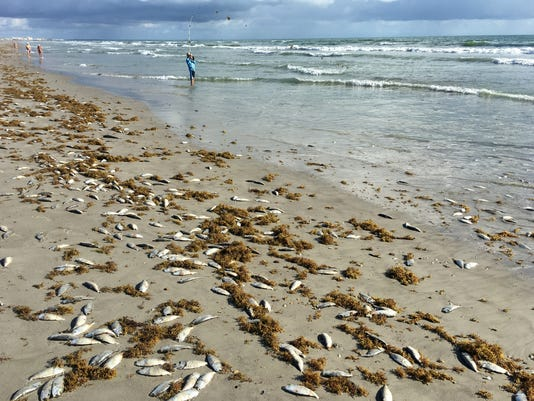 Red Tide fish kill