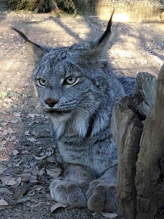 VTD0726 - CAT 3.jpg