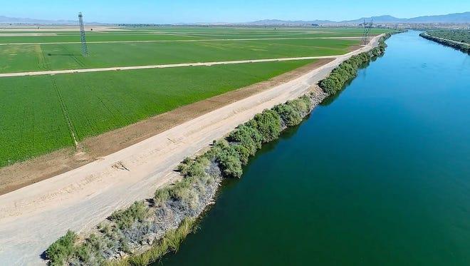 Fields of alfalfa run alongside the Colorado River in the Palo Verde Valley.