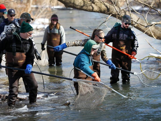 DEC officials look for rainbow trout to shock so that they can take sample measurements and determine spawning conditions prior to the fishing season at the annual rainbow trout sampling in Naples Creek south of Canandaigua Lake in Naples.